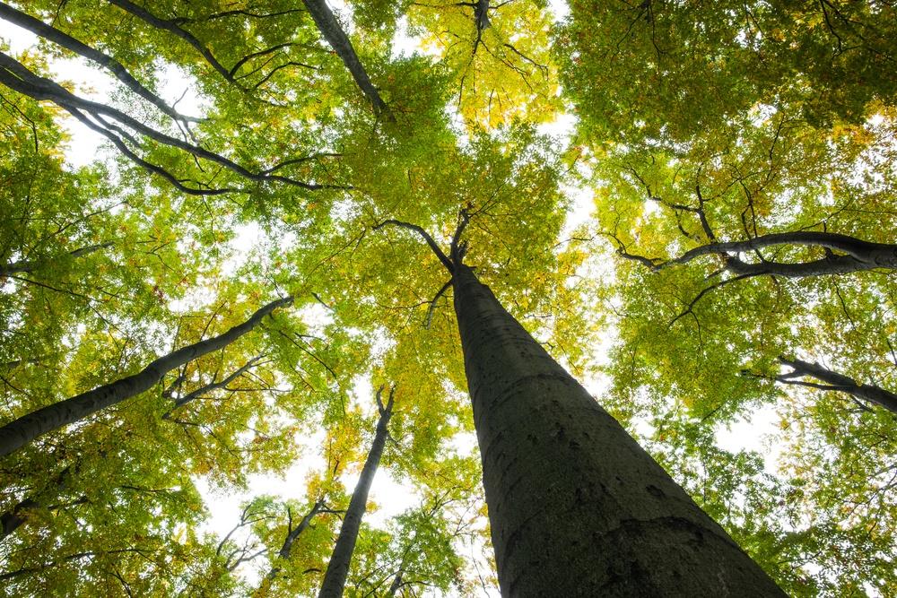 Propane is an environmentally friendly heat source